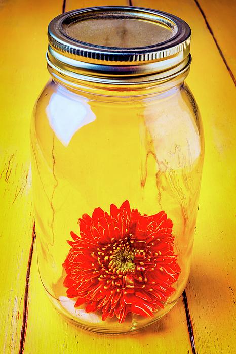 Mood Photograph - Daisy In Glass Jar by Garry Gay