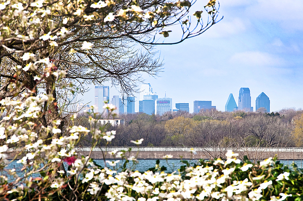Flower Photograph - Dallas Through The Dogwood Flowers by Tamyra Ayles