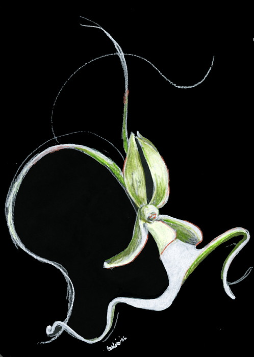 Dance Of The Ghost Orchid Print by Carliss Mora
