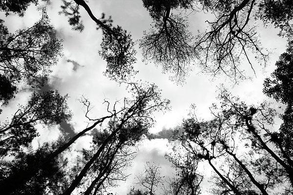 Horizontal Photograph - Dark Forest by Janzgrossetkino