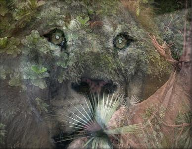 Lion Digital Art - Daydreaming by Beverly Turner