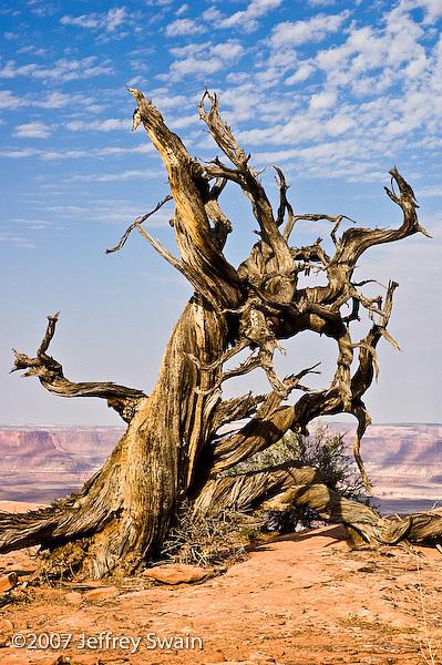 Landscape Photograph - Dead Tree 2   Canyonlands National Park by Jeffrey Swain