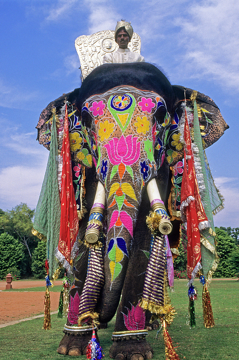Decorated Indian Elephant Photograph By Michele Burgess