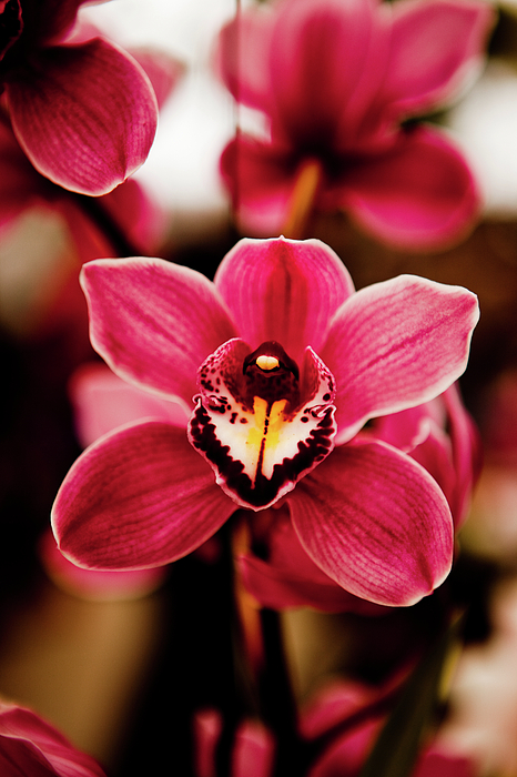 Vertical Photograph - Deep Cut Orchid Society 15th Annual Orchid Show by Dan Pfeffer