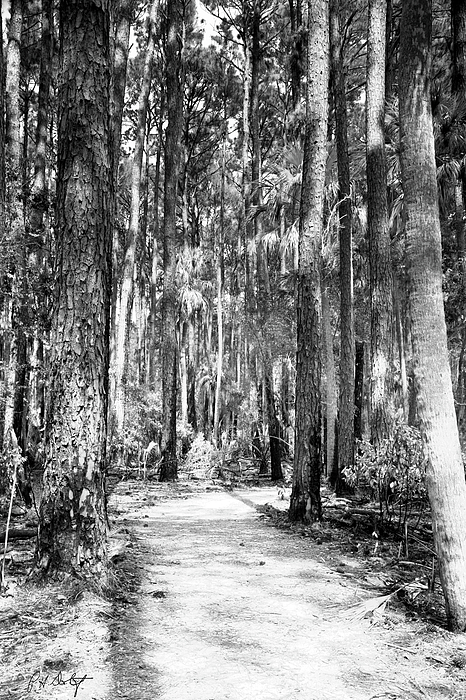 Hunting Island Photograph - Deep In The Woods  by Phill Doherty