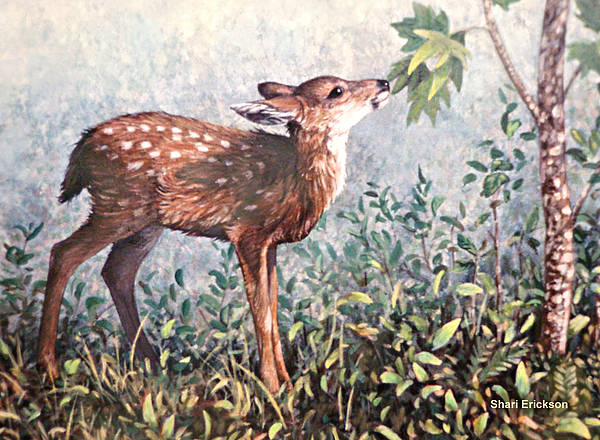 Deer Painting - Deer Fawn by Shari Erickson