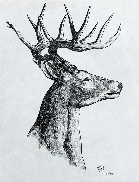 Michael Drawing - Deer by Michael  TMAD Finney