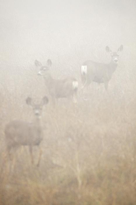 Deer Photograph - Dense Fog Alert by Greg Clure