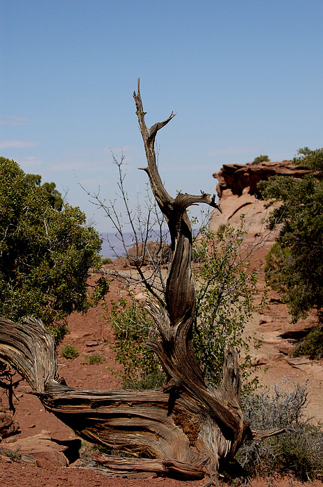 Nature Photograph - Desert Sculpture by Debbie Mount