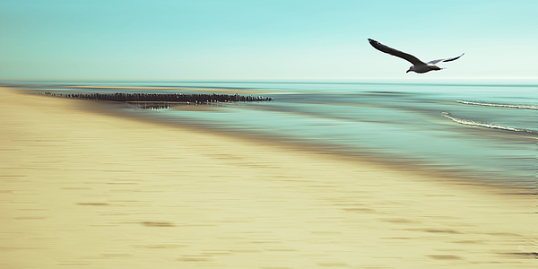 Seagull Photograph - Desire by Hannes Cmarits