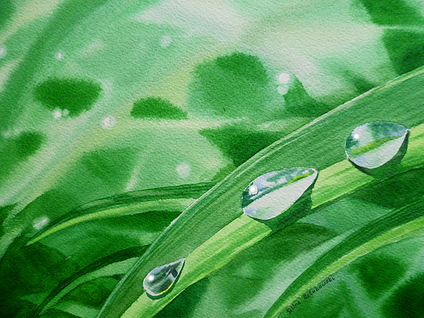 Dew Drop Painting - Dew Drops by Irina Sztukowski