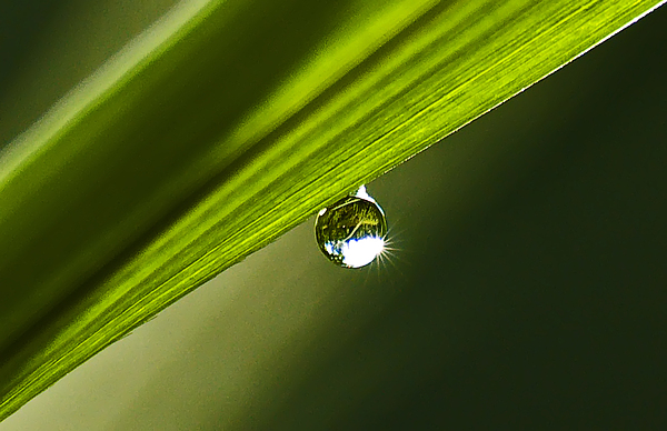 Landscape Photograph - Dewdrop On A Blade Of Grass by Michael Whitaker
