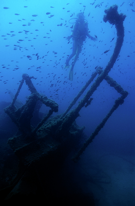 Abandoned Photograph - Diver Exploring The Dalton Shipwreck With A School Of Fish Swimming by Sami Sarkis