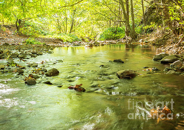 Stream Photograph - Dog Creek by Linda Steider