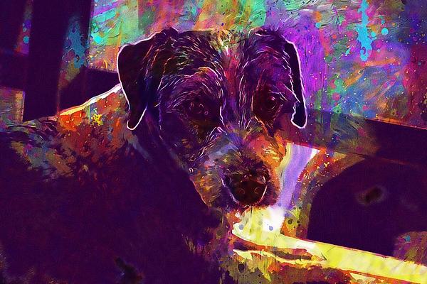 Dog Digital Art - Dog Terrier Russell Pet Animal  by PixBreak Art