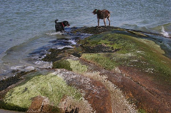 Dogs Photograph - Dogs On The Rocks by Rose Martin