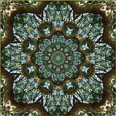 Mandala Photograph - Dome Of The Green Cathedral by Willa Davis