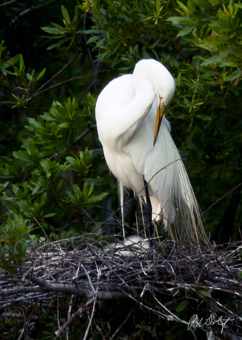 Beaufort County Photograph - Doting Mother by Phill Doherty