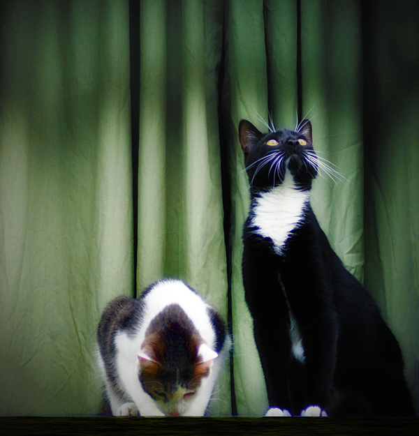 Cat Photograph - Down Or Up by Bill Cannon