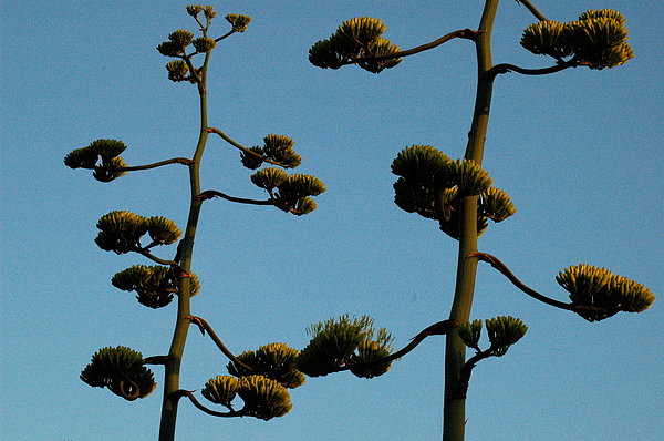 Plant Photograph - Dr Seuss Plant by Teresa Blanton