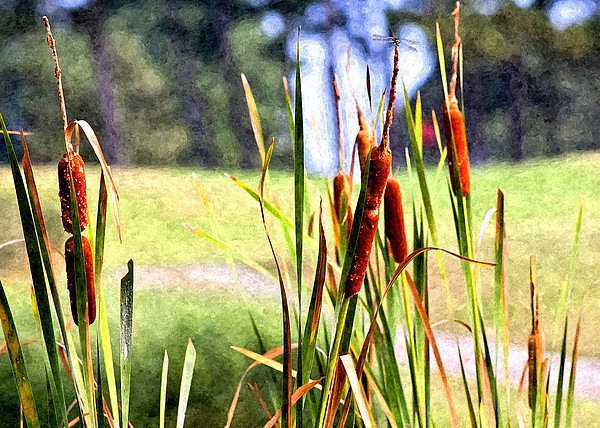 Dragon Fly Photograph - Dragon Fly And Cattails In Watercolor by Gary Adkins