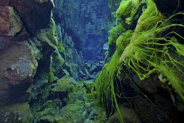 Iceland Photograph - Dramatic Fluorescent Green Algae by Mathieu Meur