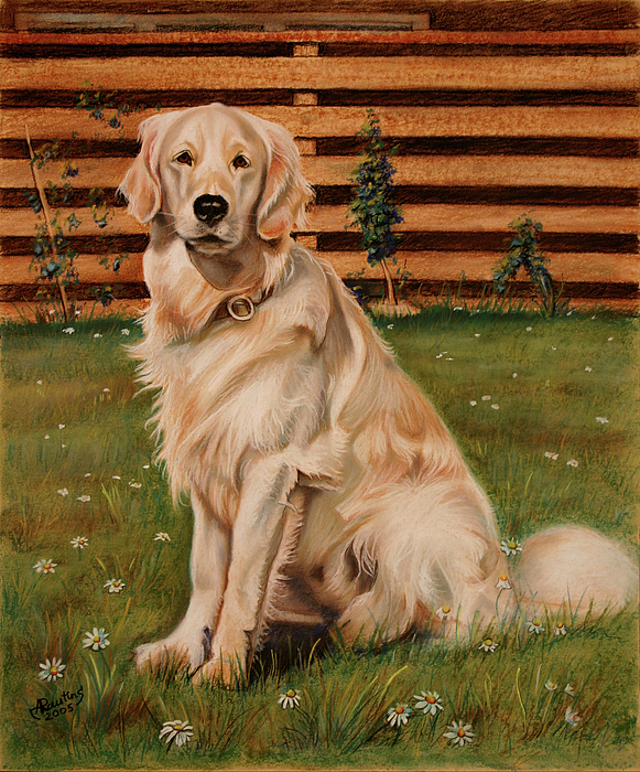 Golden Retriever Drawing - Drawing Of A Golden Retriever by Agris Rautins