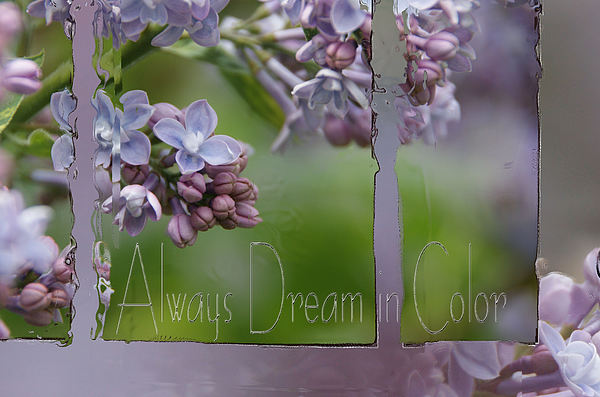 Lilacs Photograph - Dream In Color by Tingy Wende