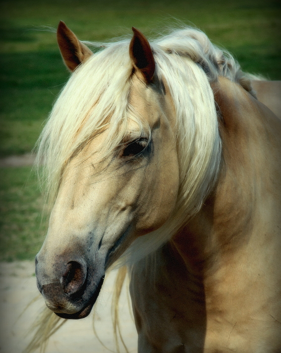 Horses Photograph - Dreams Of Honey by Karen Wiles