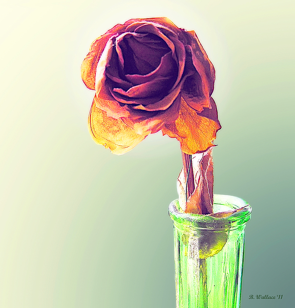 2d Photograph - Dried Rose by Brian Wallace