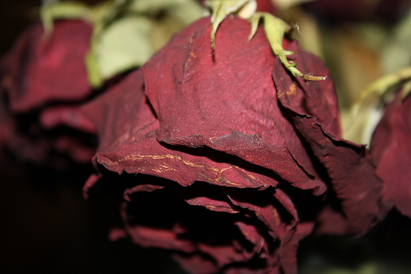 Flower Photograph - Dried To Perfection by Monica Smith