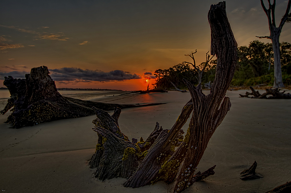 Jekyll Island Photograph - Driftwood Beach Hdr 3 by Jason Blalock