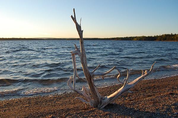 Water Photograph - Driftwood by Donald Mac Fadyen