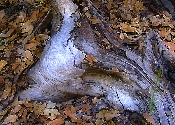 Landscape Photograph - Driftwood In Lahonda by Karen  W Meyer