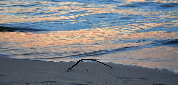 Driftwood Photograph - Driftwood by Luiza W