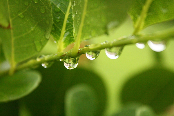 Nature Photograph - Drip Drop by Bradley Nichol