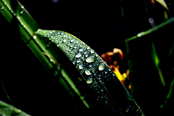 Droplets Of Water Photograph by Robert Scauzillo