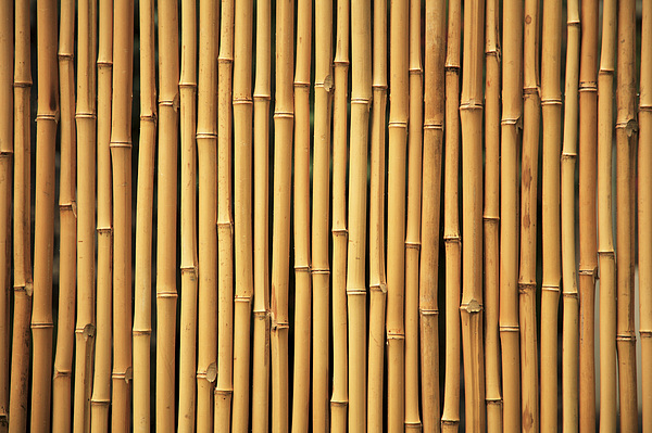 Abstract Photograph - Dry Bamboo Rows by Brandon Tabiolo - Printscapes