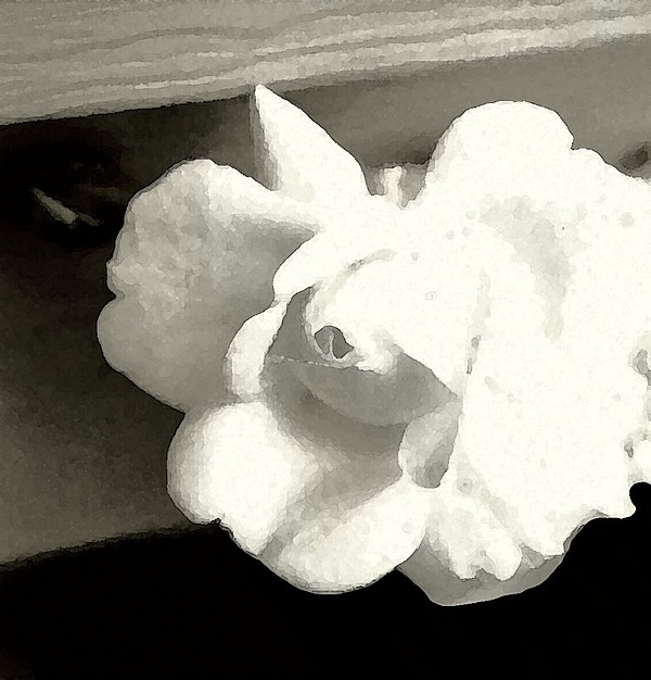 Dry Brush Photograph - Dry Brushed Rose by Emily Kelley