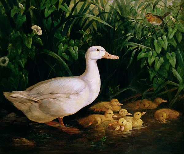 Duck Painting - Duck And Ducklings by English School