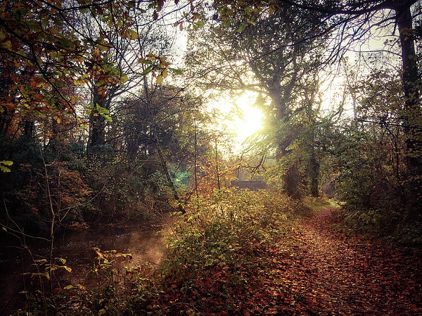 Irish Landscape Photograph - Dunmore Wood - Autumnal Morning by Andy Walsh
