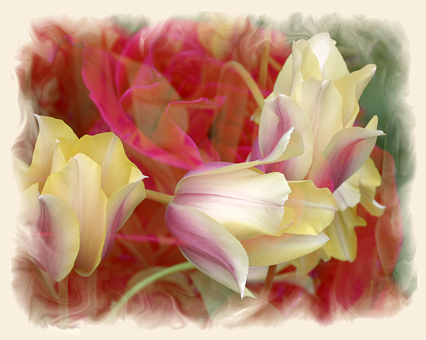 Floral Photograph - Dutch Treat by Chuck Brittenham