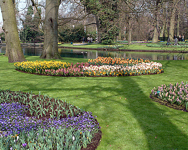 Netherlands Photograph - Dutch Tulip Gardens by Charles  Ridgway
