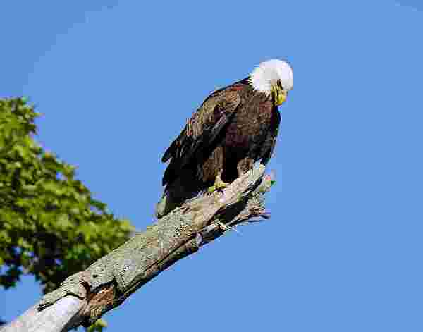 Eagle Photograph - Eagle by James Wallace