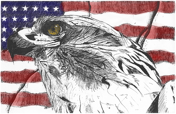 Patriotic Drawing - Eagle by Nathaniel Hoffman