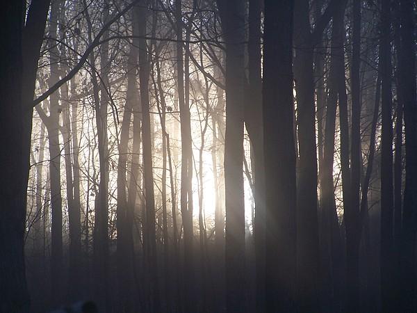 Oak Trees Photograph - Early Morning Oak Trees by Lila Mattison