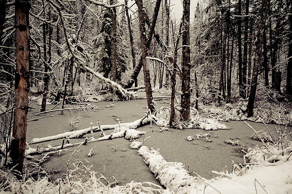 Scenic Photograph - Early Winter by Todd Bissonette