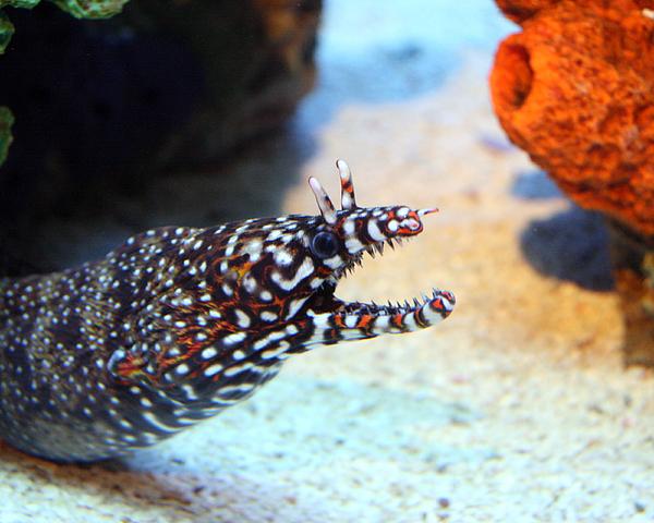 Eel Photograph - Eel by George Jones