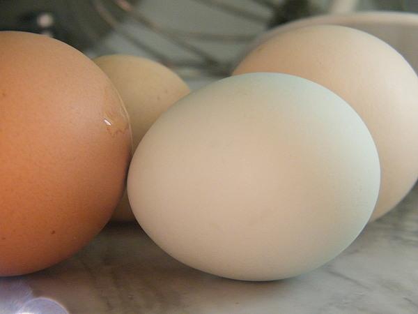 Egg 3 Photograph by Molly Zuhlke