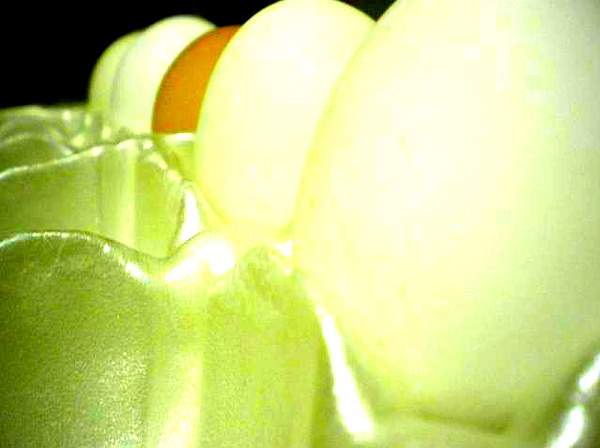 Egg 5 Photograph by Julia  Chamberlain